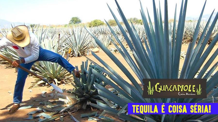 Tequila é coisa séria!